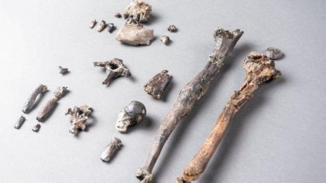 21 huesos de un Danuvius macho