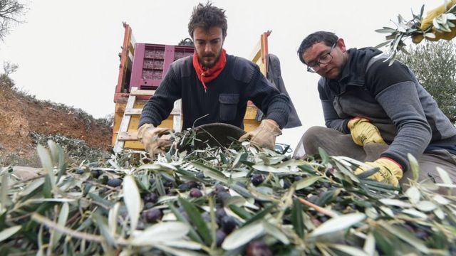 Olives pitting US against EU in global trade fight