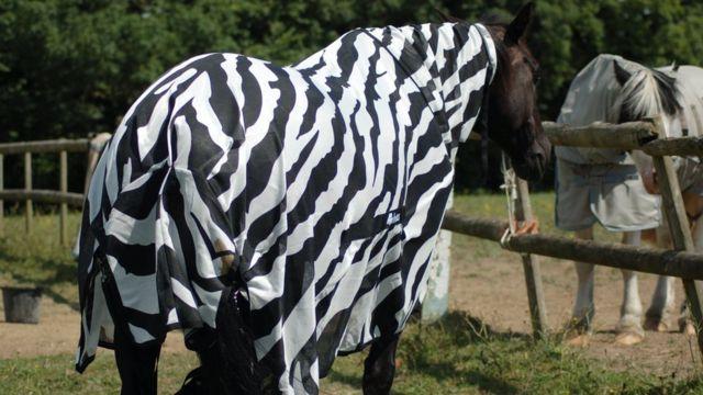 лошади в попонах, полосатой и гладкой