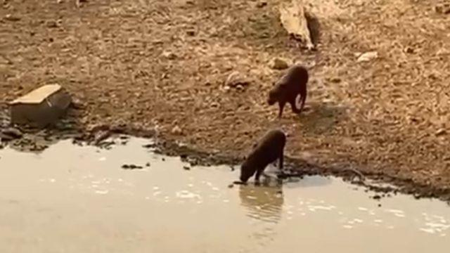 Animais em área irrigada pela Ampara Animal Selvagem