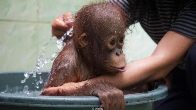जानवर को धोने काम