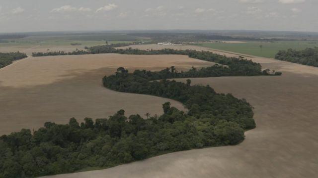 Vista aérea de fazendas de soja em Rondônia