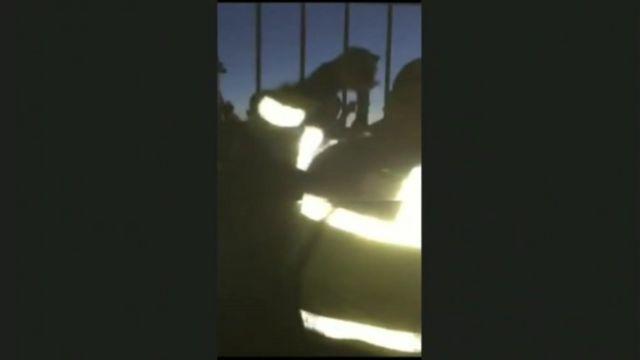 The police officer filmed raising his baton