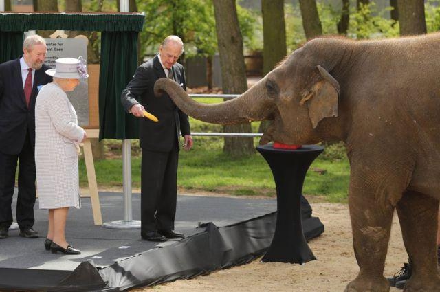 في أبريل/ نيسان 2017، رافق الدوق زوجته الملكة في إفتتاح مركز جديد لرعاية الأفيال في حديقة الحيوان في بدفوردشاير