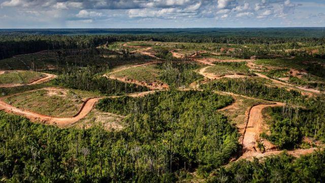 Área de floresta devastada vista de cima em Papua, na Indonésia