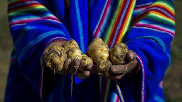 Patata es un cruce entre batata, del taíno, y papa, del quéchua.