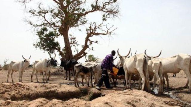 펄라니 목동들은 가축을 돌보면서 먼 거리를 이동한다.