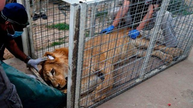 گرفتن مجوز انتقال حیوانات از دولت عراق هفتهها طول کشید