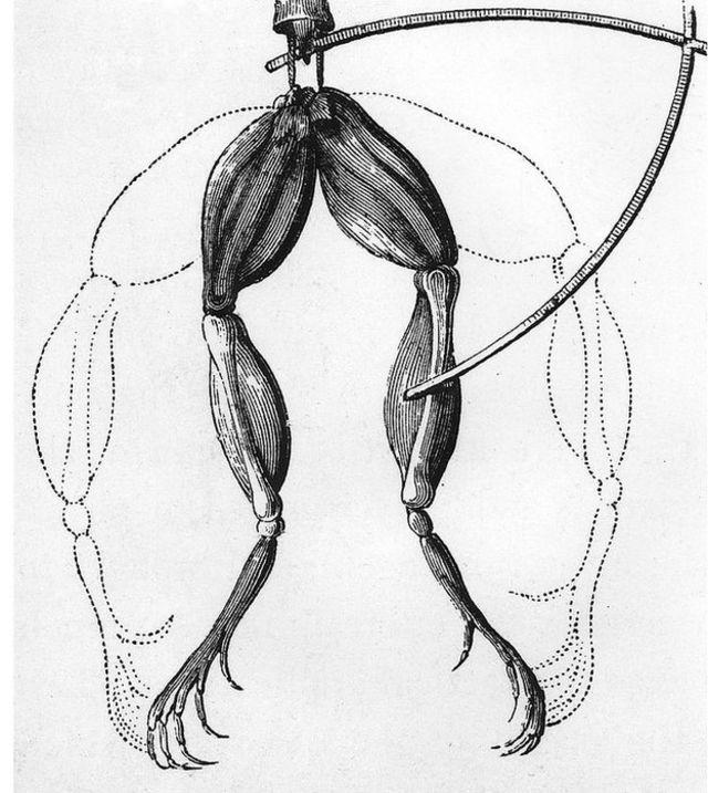 Contracción de las patas de una rana en una descripción del experimento de Galvani.