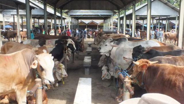 idul adha, covid-19, virus corona, hewan kurban, Pasar Ambarawa