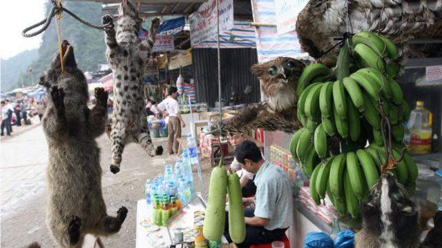 Việt Nam, wildlife trade