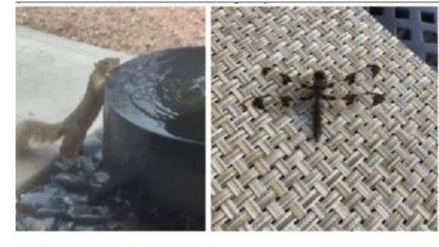 Ardilla y libélula
