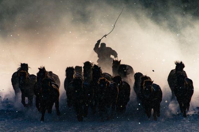 Погонщик лошадей щелкает кнутом