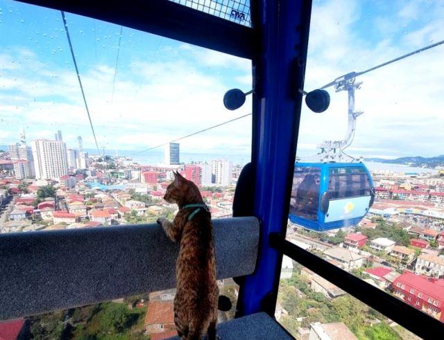 Cat on cable car in Batumi, Georgia