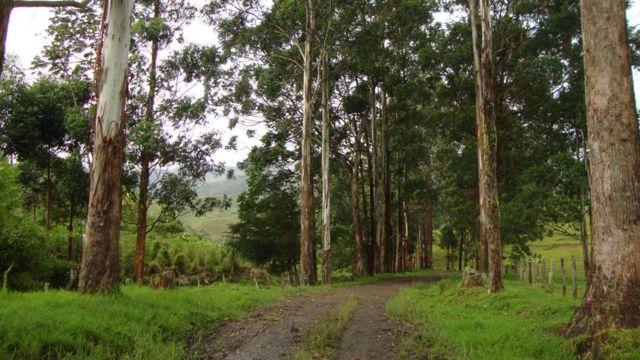 Urrao, Antioquia, Colombia.