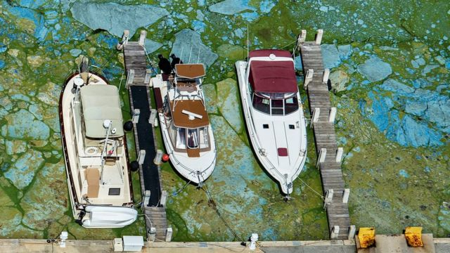 Barcos rodeados por algas