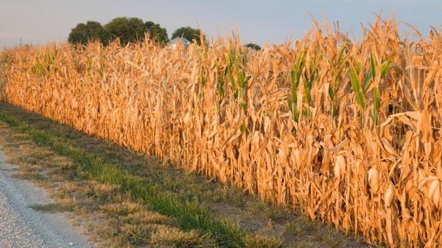 По мере изменения климата на Земле популярность засева облаков в целях орошения полей может расти