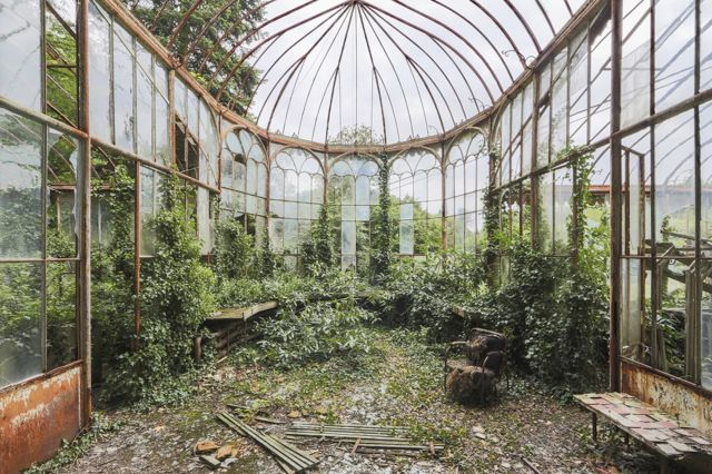 A derelict and overgrown large greenhouse