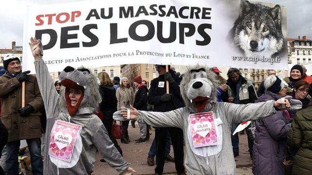 การต่อต้านการล่าหมาป่าในฝรั่งเศส