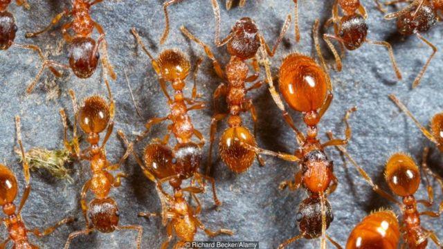 चींटियों ने चार्ल्स डार्विन को उलझन में डाल दिया था