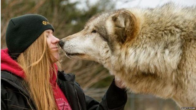 หมาป่าบางตัวมีอุปนิสัยเป็นมิตร