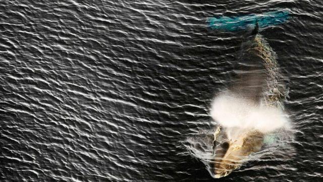 日本は来年7月以降、ミンククジラなどのクジラについて、商業目的での自由な捕鯨を始める予定だ
