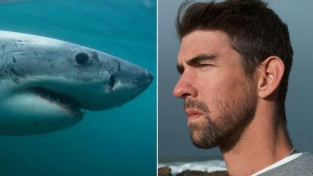 शार्क- फ़ेल्प्स