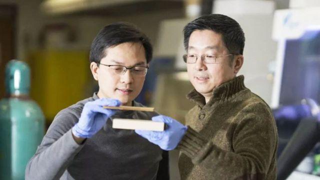 Liangbing Hu e Teng Li mostram pedaços de madeira tratada e normal