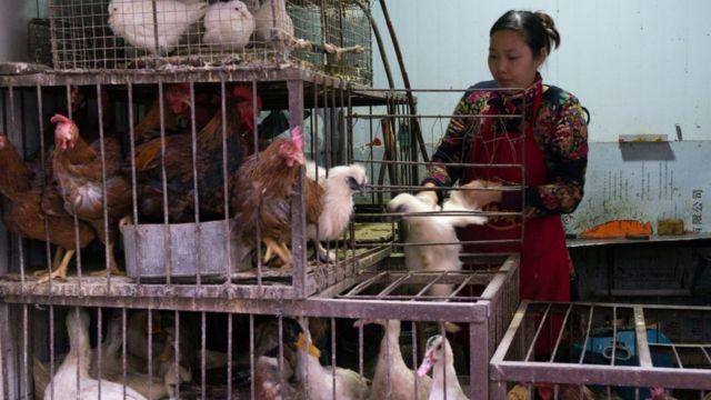 Una mujer vende en China aves vivas