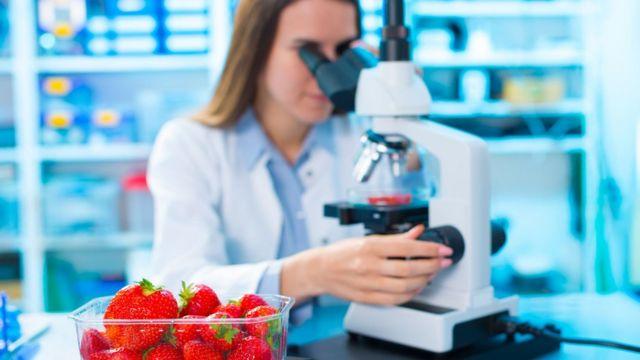 Cientista examinando morangos em laboratório