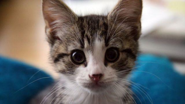 アサンジ氏に贈られた子猫