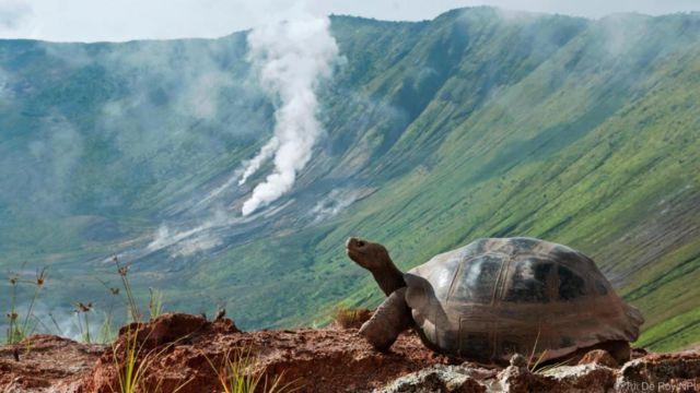 갈라파고스 거북