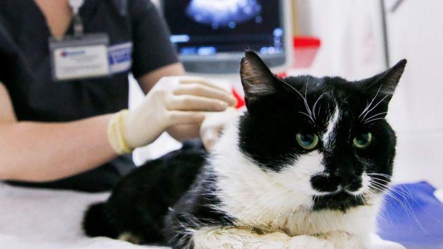 Hastalığa yakalanan evcil hayvanların çoğunun bunu asemptomatik veya hafif semptomlarla atlattığı görüldü