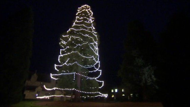 UK's tallest' Christmas tree at Wakehurst Place is decorated - BBC News