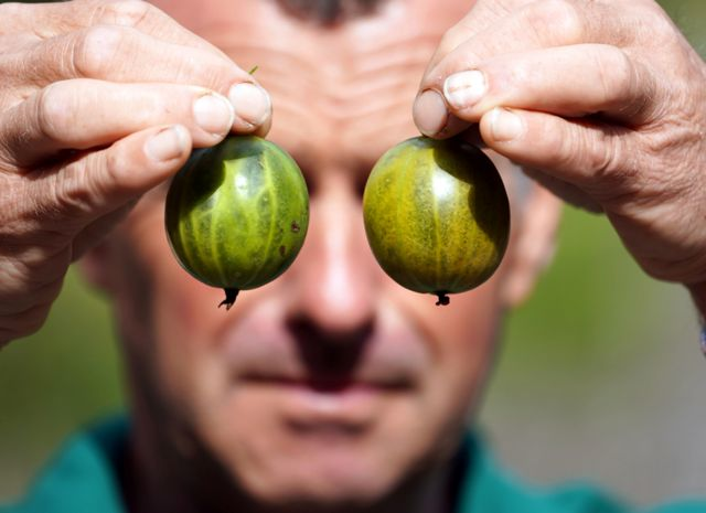 Graeme Watson poses with his record-breaking gooseberry