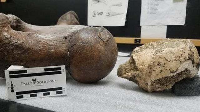 Giant sloth remains found in Los Angeles
