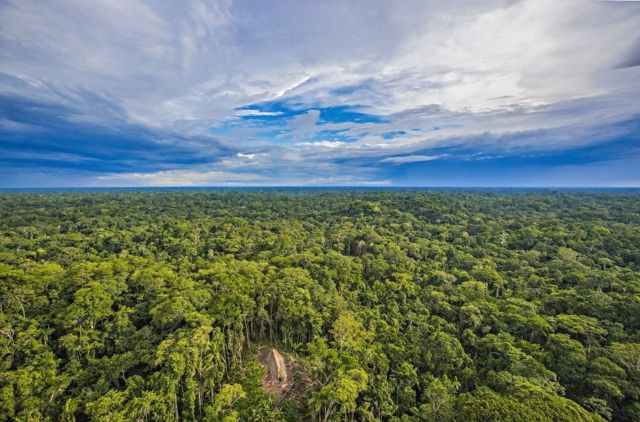 The tribe lives in an area with dense vegetation