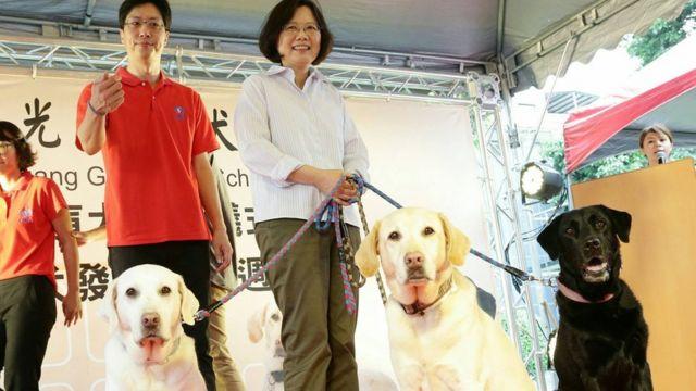 台灣總統蔡英文收養了三頭退役導盲犬