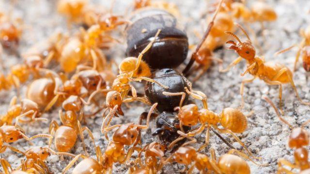 Hormiga reina con otras hormigas