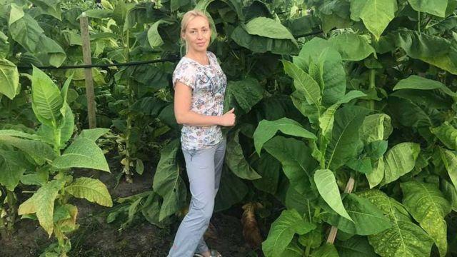 Para mantener la granja vacía, los Yuskevich plantaron tabaco en ella.