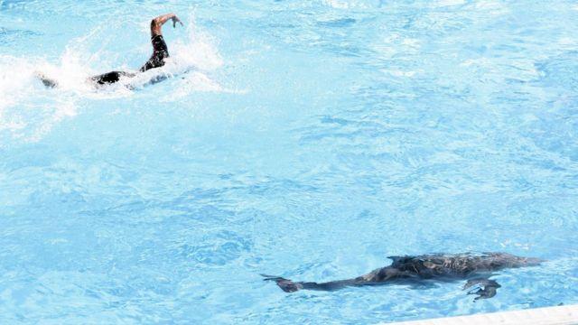 Филиппо Маньини плыве наперегонки с дельфинами