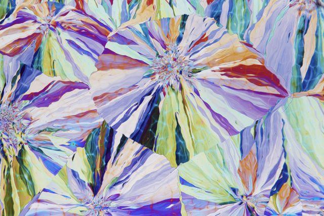 Willow up close by David Maitland, UK