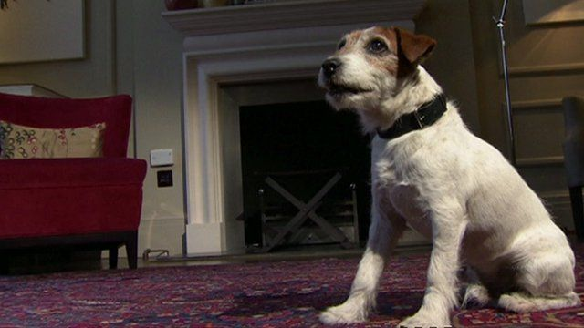 """File photo from 2012 of Uggie, the dog who starred in the film """"The Artist"""""""