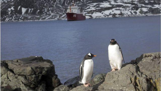 Pinguins na Antártida
