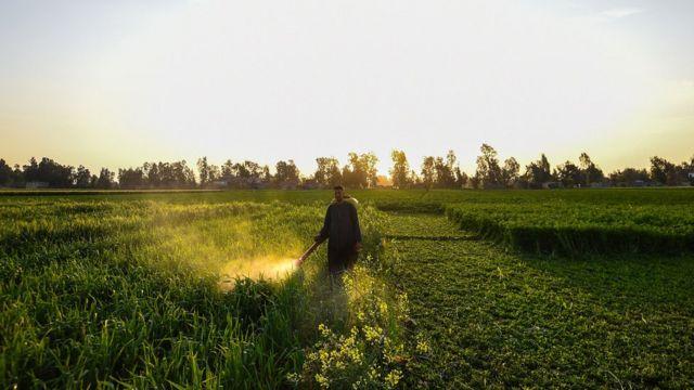 Un hombre esparciendo pesticida en un campo verde.