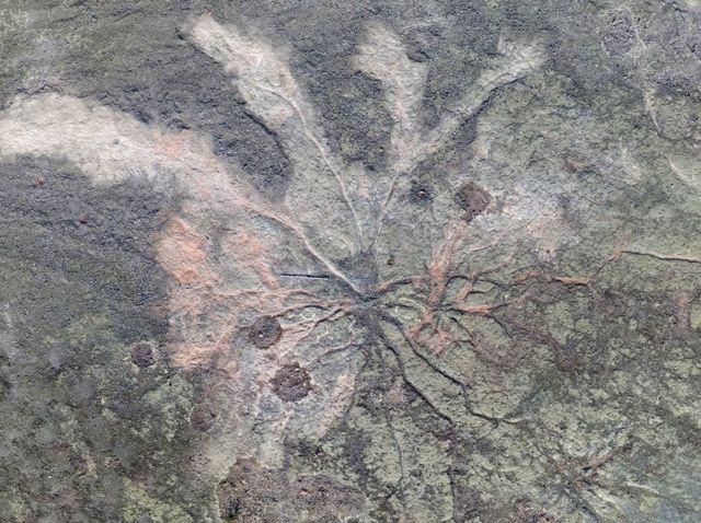 Fóssil de árvore com ramificações em pedra