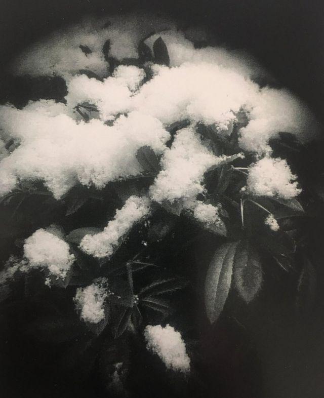 ثلوج فوق أوراق نبات