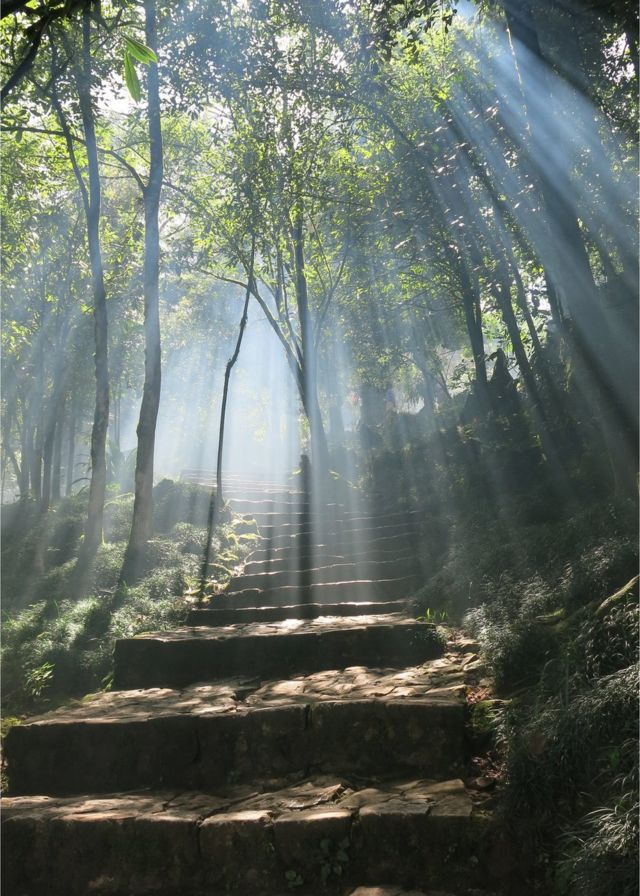 Stairs surrounded by trees and smoke with rays of sunlight shining through