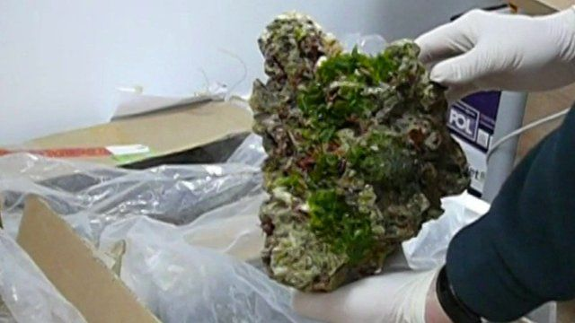 Part of the live coral seized