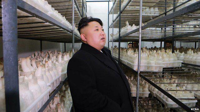 North Korean leader Kim Jong-Un inspects the newly-built Pyongyang City Mushroom Farm. 10 January 2015